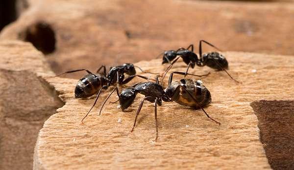 Что делать, если в машине завелись муравьи