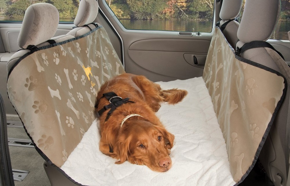 Собаку укачивает в машине