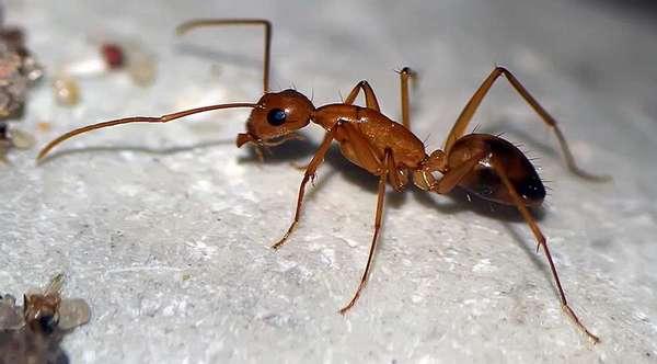 Профилактика против муравьев
