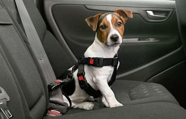 Как перевозить животных в машине
