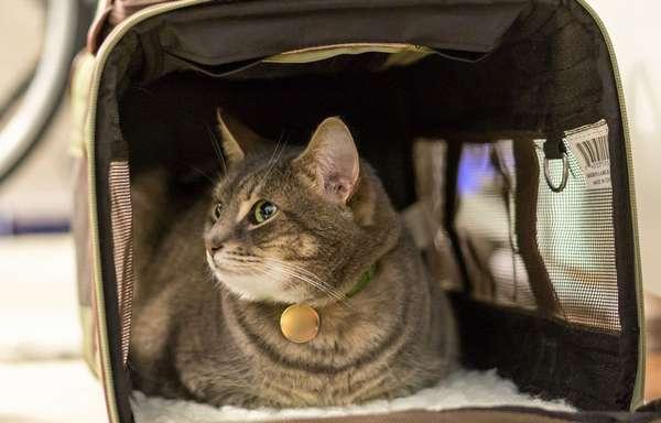 Перевозка кошки в машине